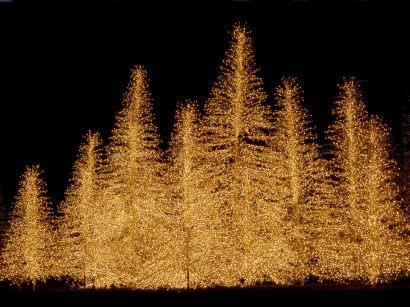 19-Christmas-wallpapers-free-christmas-trees-full-of-lights-wallpaper